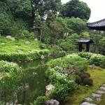 建仁寺の塔頭・両足院「半夏生の庭園特別公開」