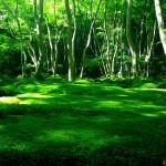 嵐山を観光するなら、おすすめの隠れスポット「祇王寺」